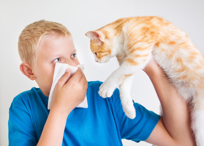 pet dander allergies are the most common and can cause health problems
